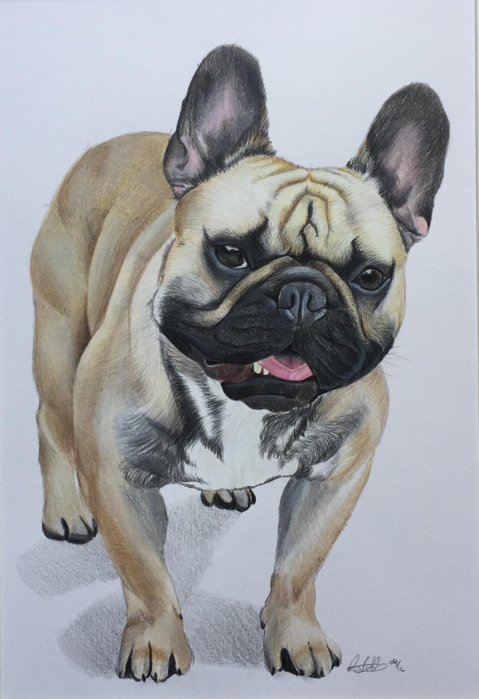 french bulldog dog pet portrait