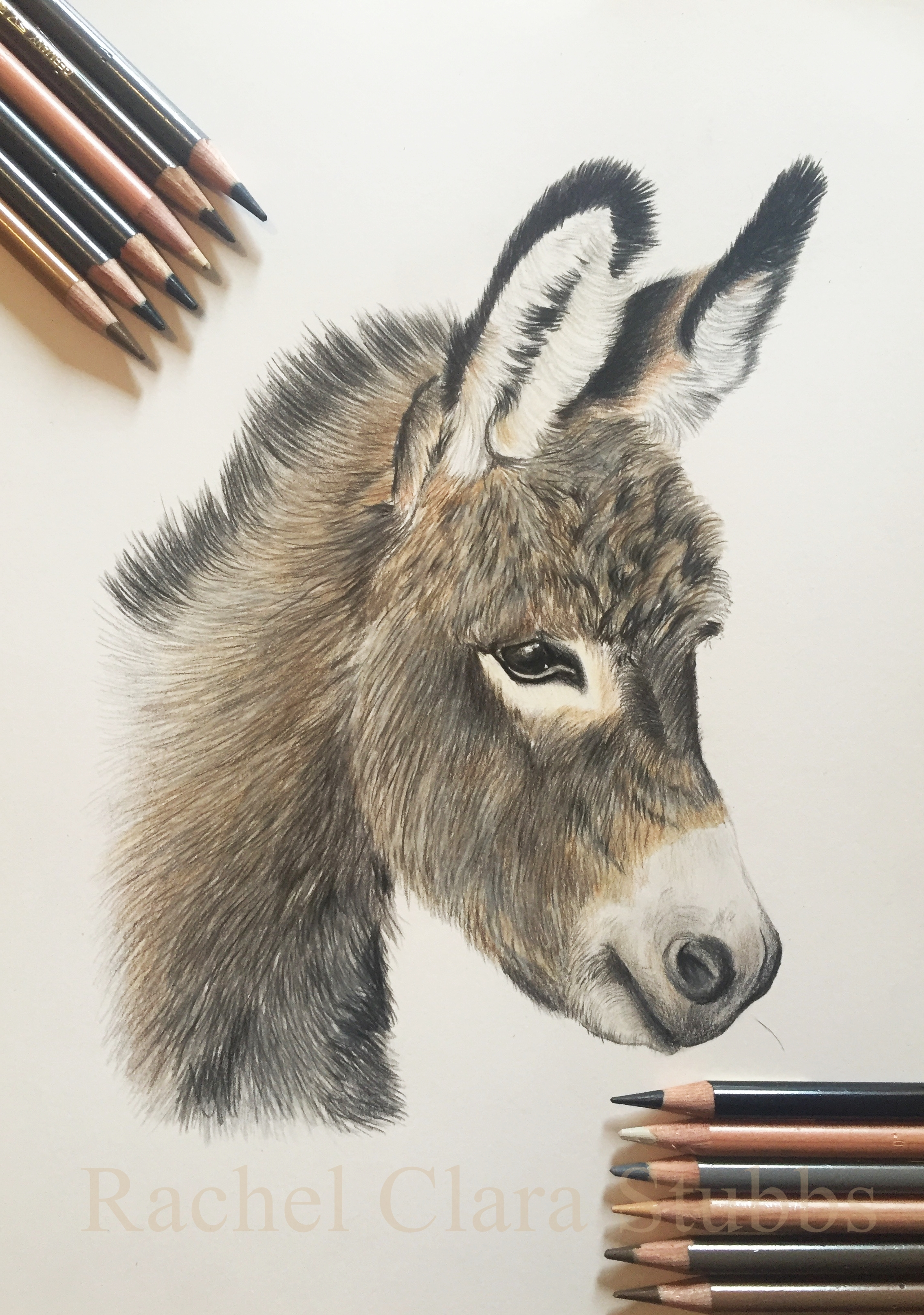Donkey pet portrait