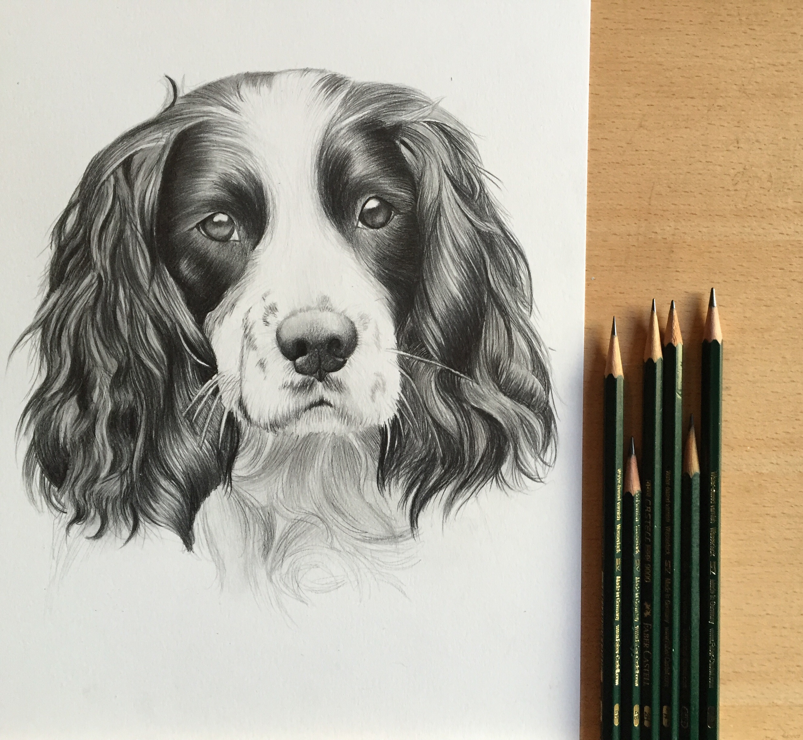 springer pet portrait