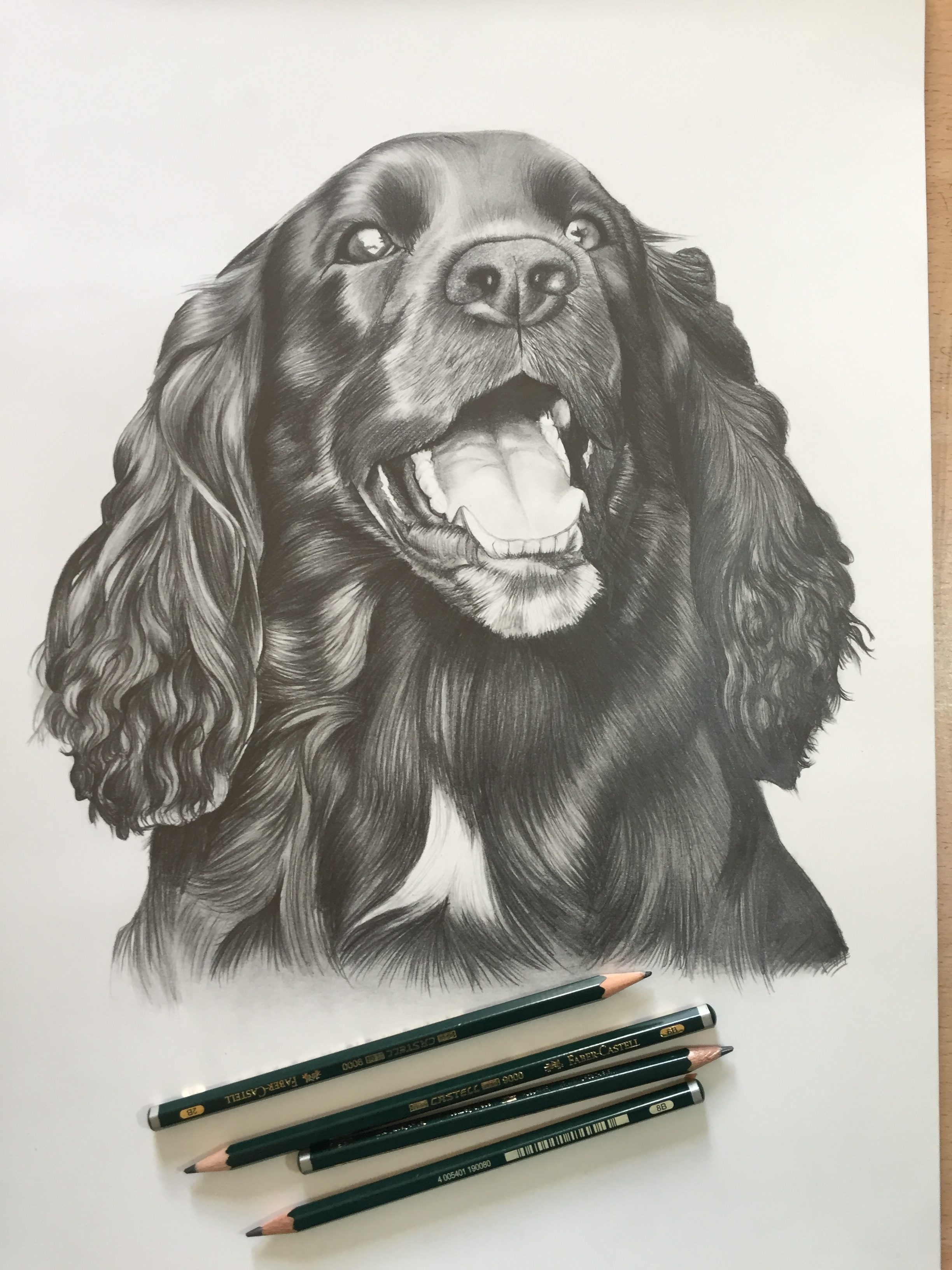 cocker spaniel pet dog portrait