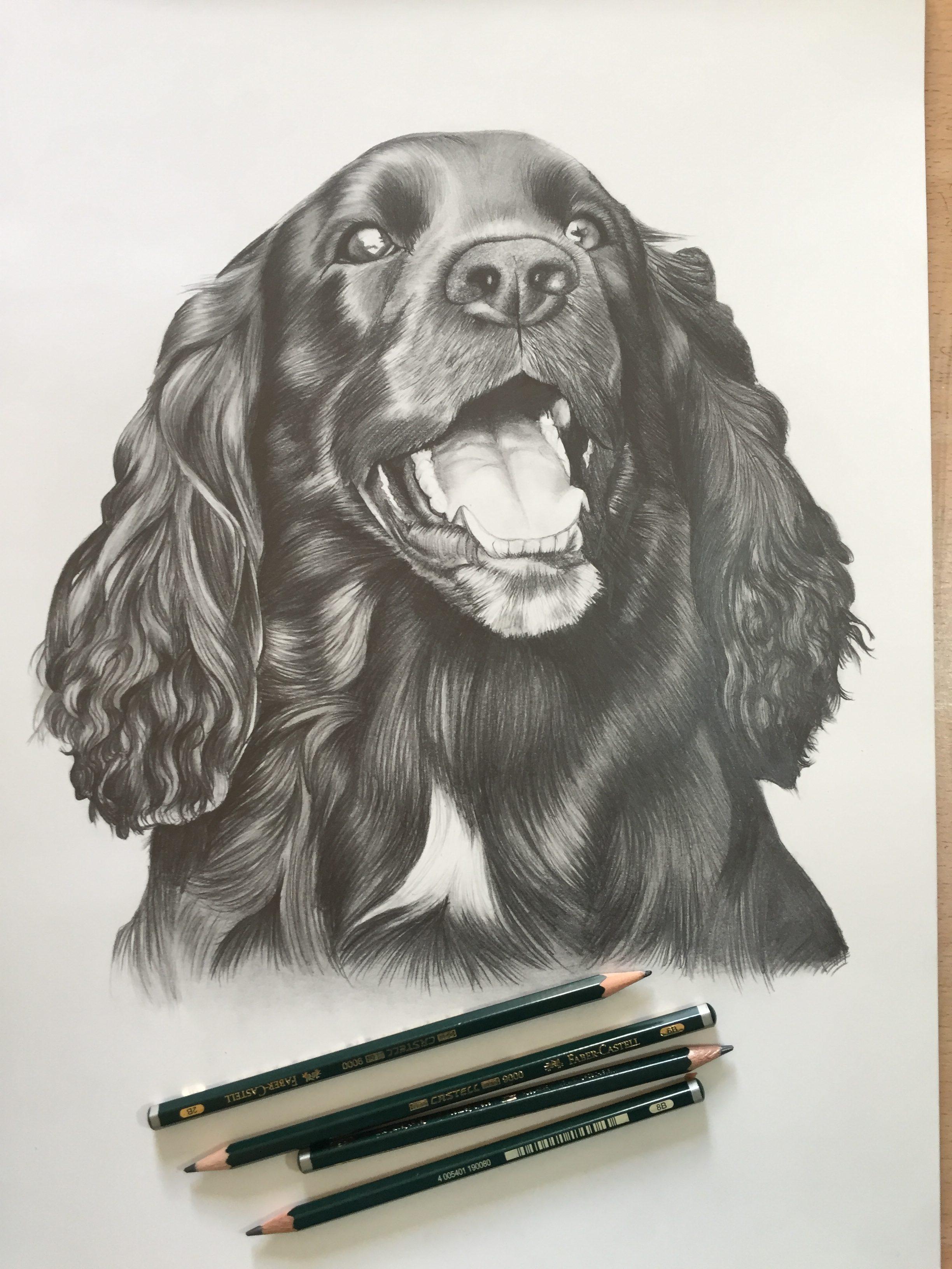 cocker spaniel pet dog portrait