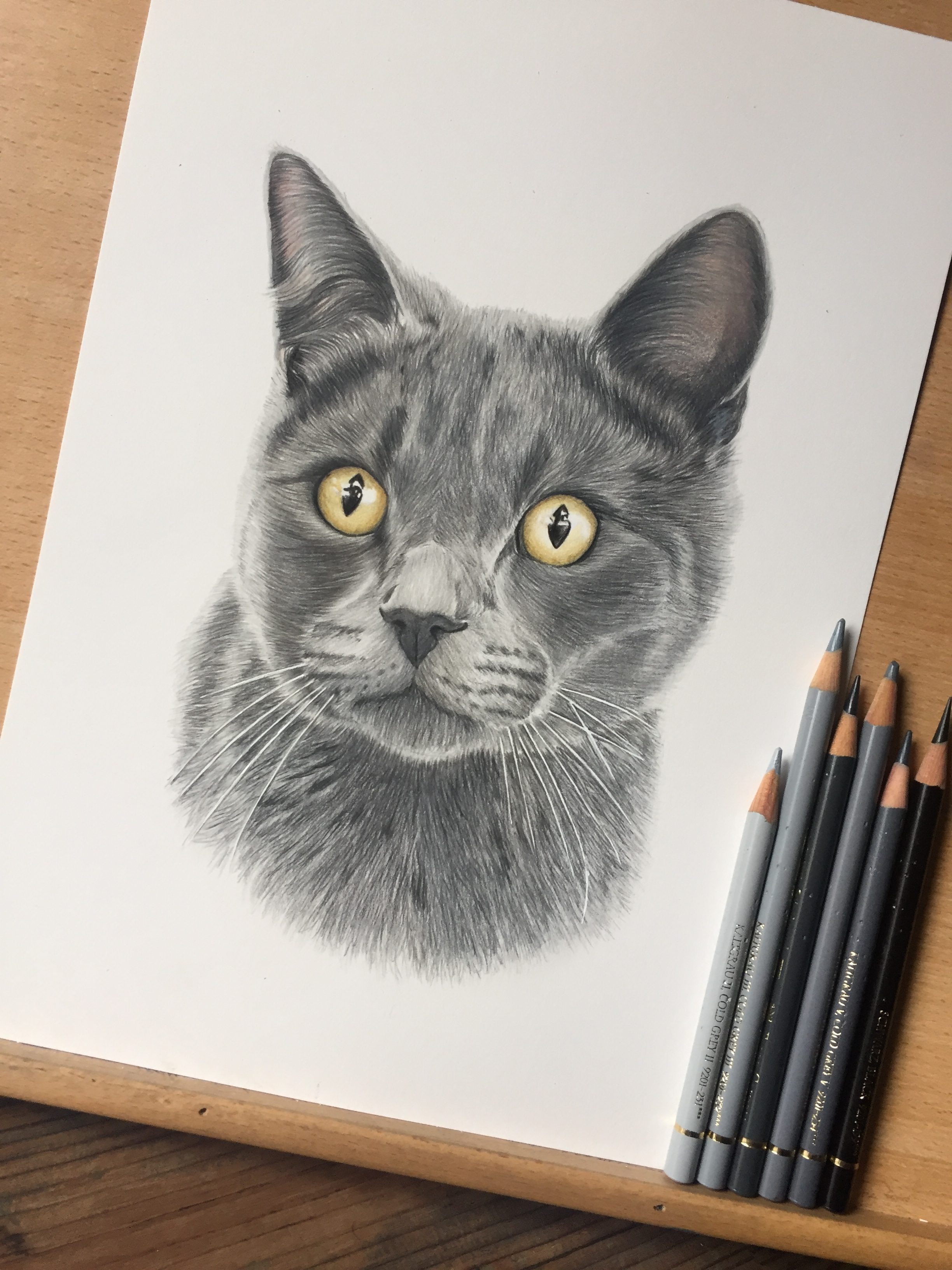 grey cat pet portrait