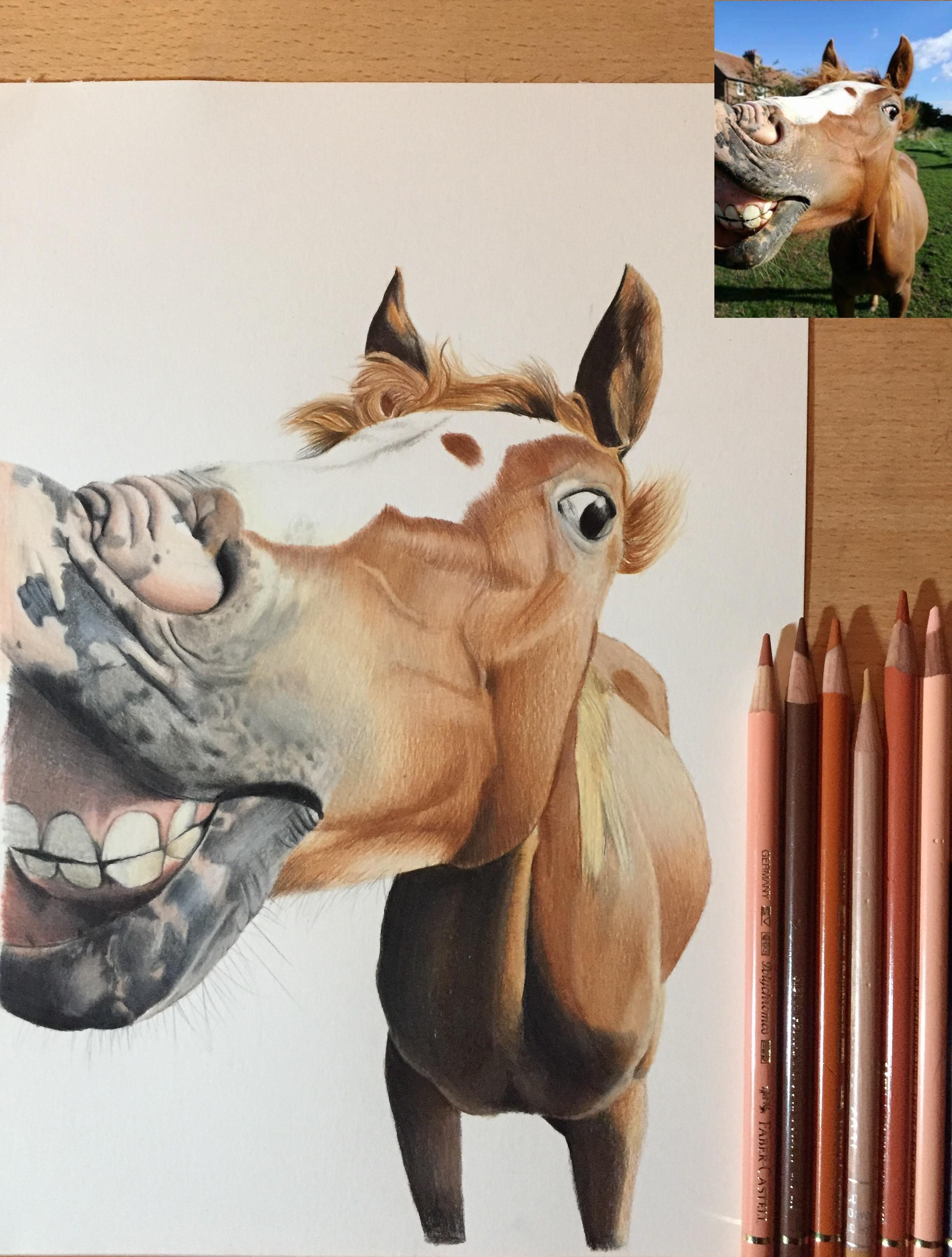 funny horse pet equine portrait