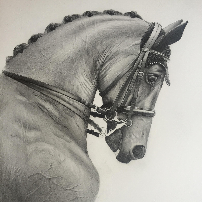 Dressage horse equine portrait