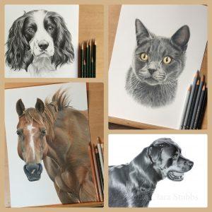 Pet portrait horse equine dog puppy cat kitten