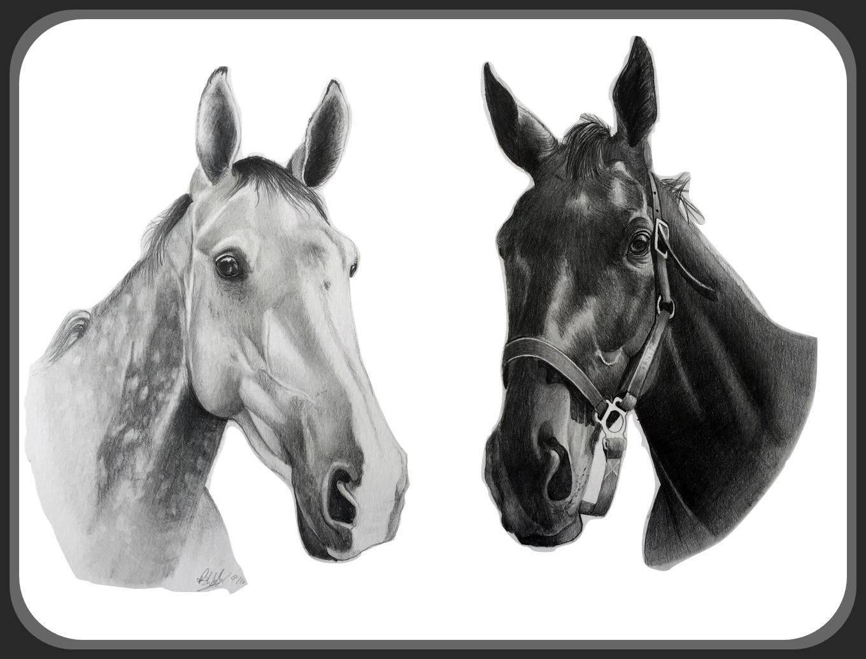 double equine pet portrait