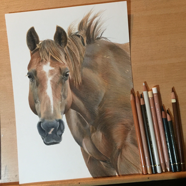 Texas horse equine pet portrait