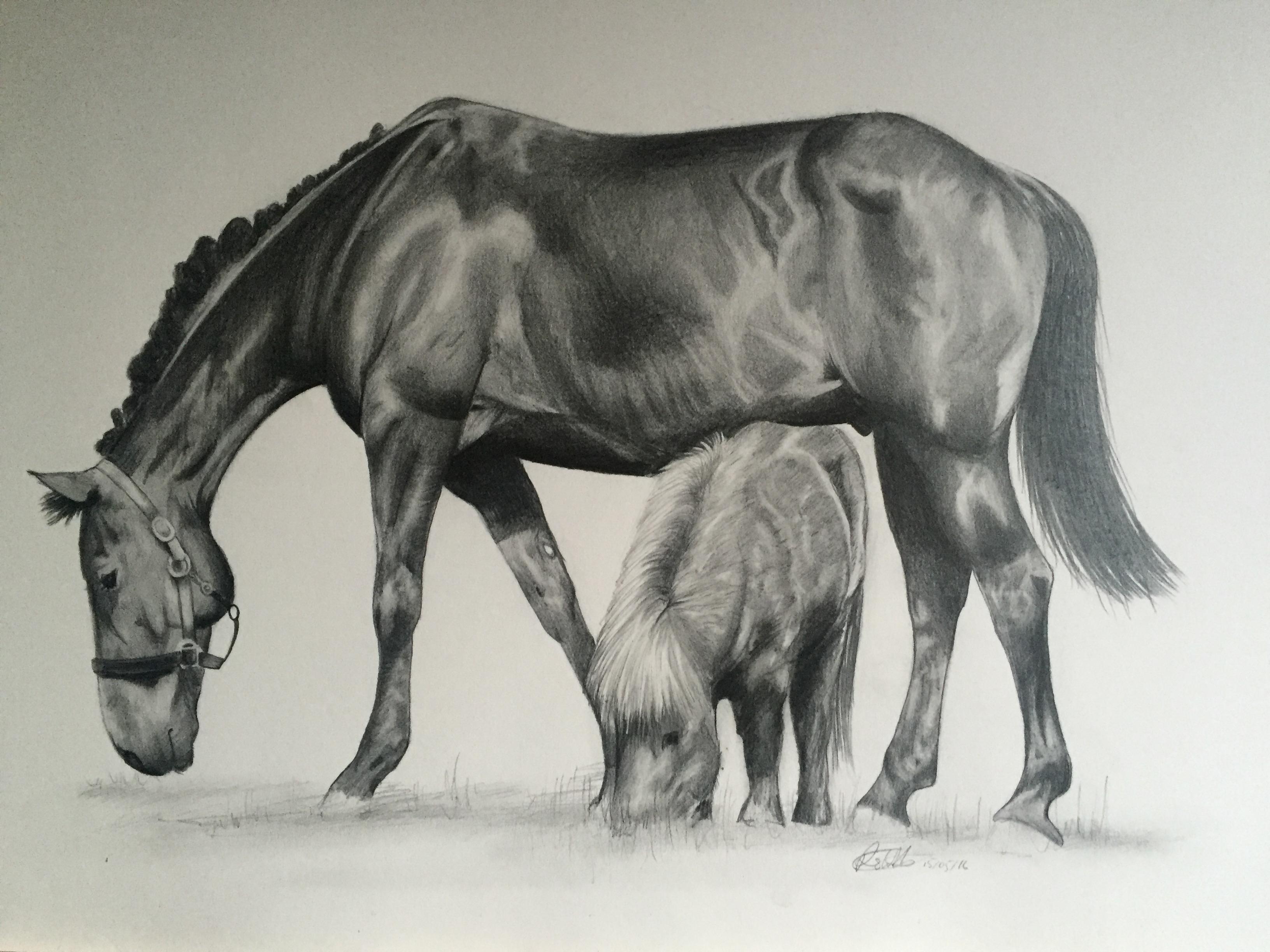 horse pet equine portrait